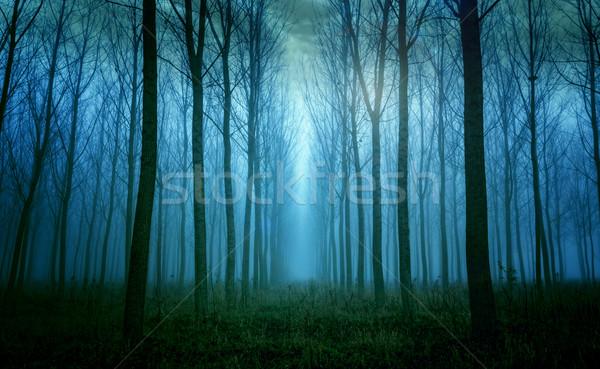 устрашающий высокий деревья тумана дерево Сток-фото © Geribody