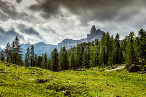 taly, Dolomites - a wonderful landscape, meadow among pine Stock photo © Geribody