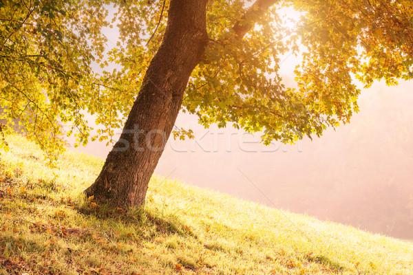 Luce alberi misty mattina albero foresta Foto d'archivio © Geribody