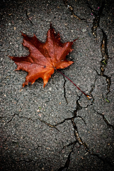 Stock photo: Maple leaf on the broken pavement