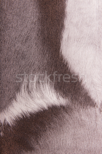 Imitation animal fur, background  Stock photo © Geribody