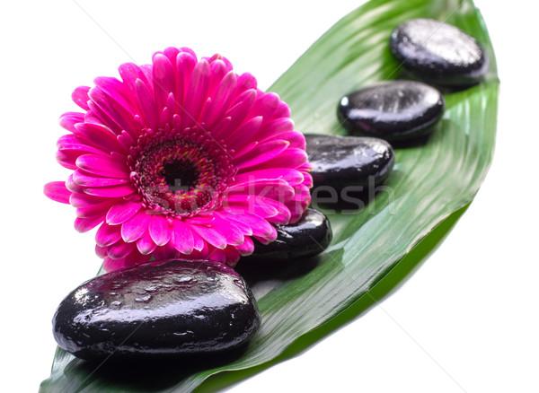 Spa taşlar papatya yeşil yaprak çiçek doğa Stok fotoğraf © Geribody
