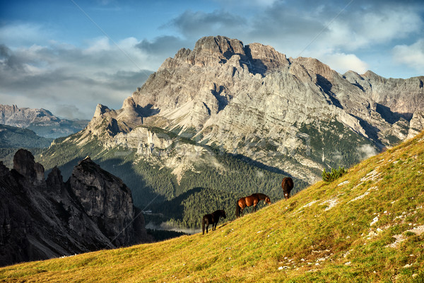 Italy, Dolomites - wonderful landscapes, horses graze near the barren rocks  Stock photo © Geribody