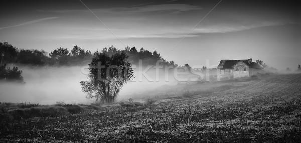 Misty foresta primavera erba strada Foto d'archivio © Geribody