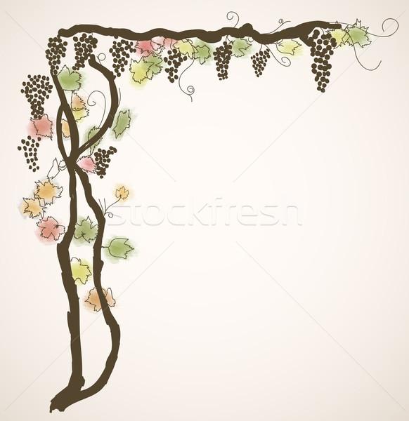 background with vine Stock photo © Ghenadie