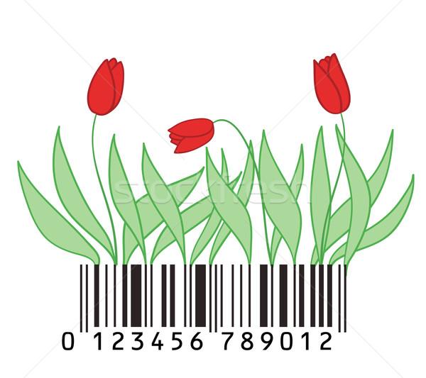 tulips stylized with barcode  Stock photo © Ghenadie