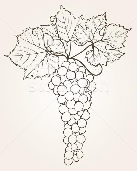 grape outline Stock photo © Ghenadie