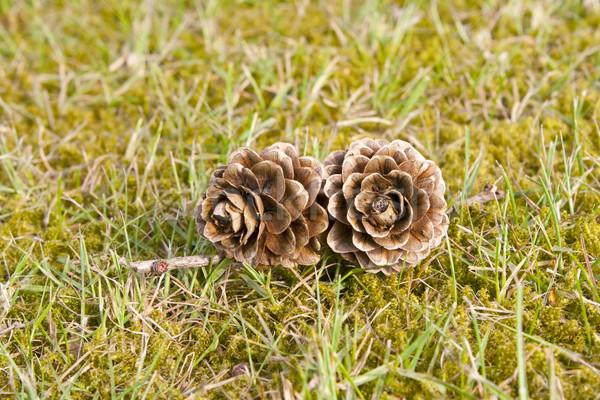 Dos hierba verde naturaleza fondo vintage Navidad Foto stock © gigra