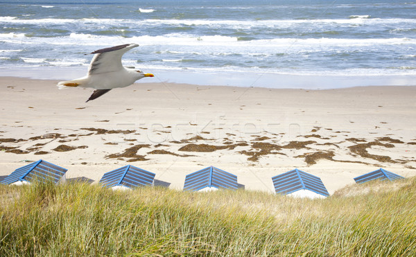 Dutch little houses on beach with seagull in De Koog Texel, The Netherlands Stock photo © gigra