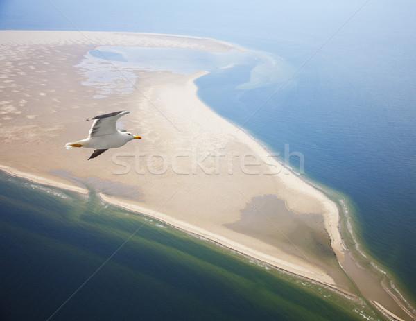 Gaivota voador praia Holanda céu natureza Foto stock © gigra