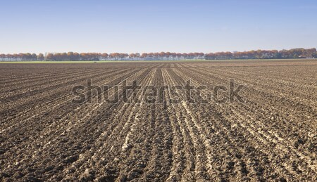 View at agricultural field in The Netherlands Stock photo © gigra