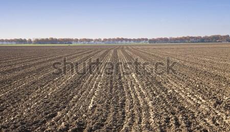 Widoku rolniczy dziedzinie Niderlandy wiosną gospodarstwa Zdjęcia stock © gigra
