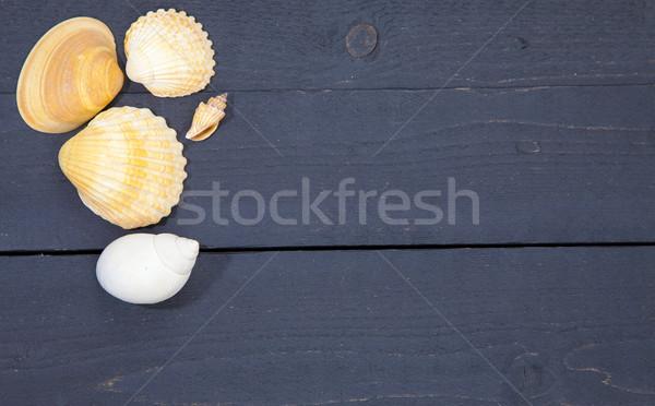 いくつかの 海 シェル 暗い 黒 木製 ストックフォト © gigra