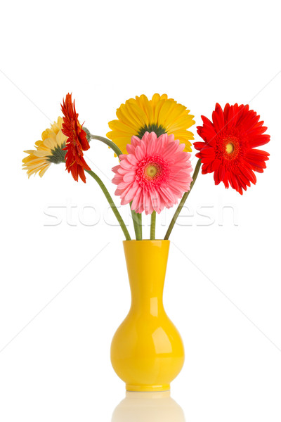 Stock photo: Gerbera.