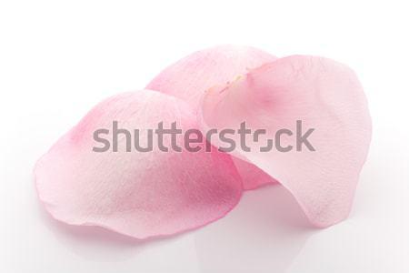 Stock photo: Petals rose.