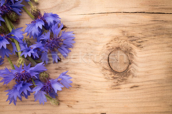 Cornflower. Stock photo © gitusik