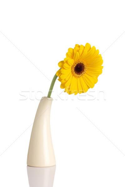 Blumenvase isoliert weiß Frühling Design Energie Stock foto © gitusik