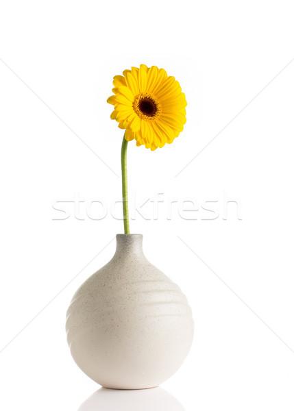 Fiori vaso isolato bianco primavera design Foto d'archivio © gitusik