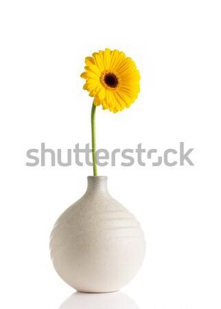 Bloemen vaas geïsoleerd witte voorjaar ontwerp Stockfoto © gitusik