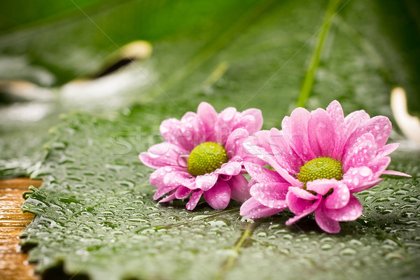 Trattamento termale spa pietre foglie verdi fiore tropicali Foto d'archivio © gitusik