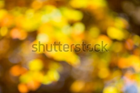 Automne bokeh lumineuses soleil nature Photo stock © gitusik