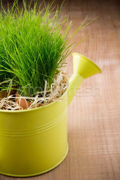 лейка зеленая трава весны природы фон лет Сток-фото © gitusik