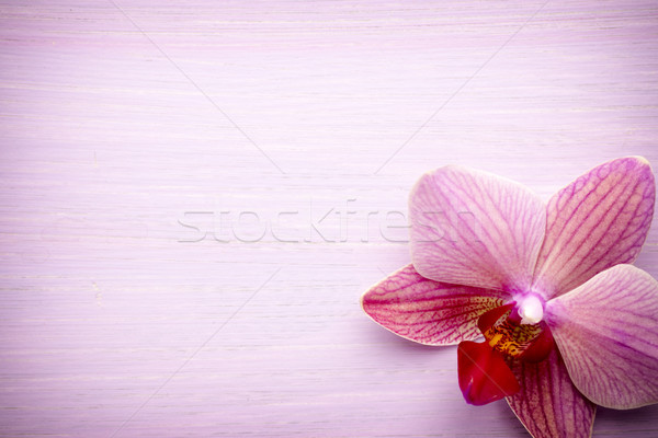 Pink orchid flower. Stock photo © gitusik