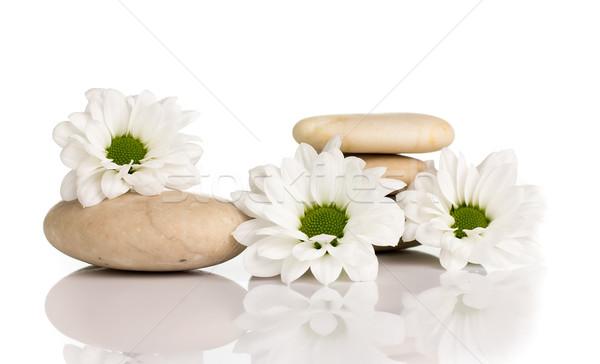 Estância termal pedras flores isolado branco abstrato Foto stock © gitusik