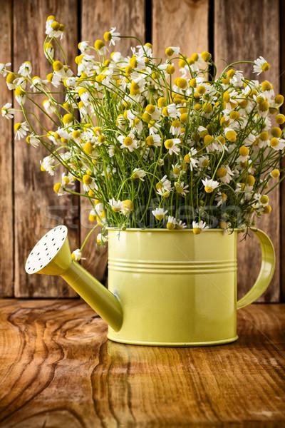 ромашка чайник поверхность цветок семьи Сток-фото © gitusik