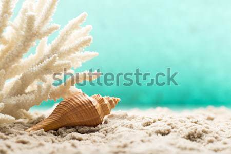 Scallop. Stock photo © gitusik