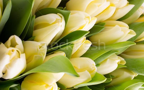 Tulipany kwiatowy kwiaty wiosną liści piękna Zdjęcia stock © gitusik