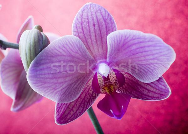 Roz Orhidee Colorat Felicitare Fundal Frumuseţe
