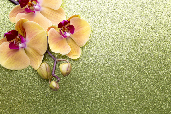 Yellow orchid. Stock photo © gitusik