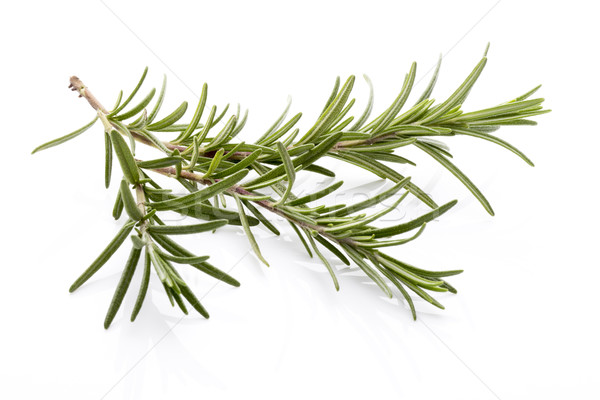 Rosemary. Stock photo © gitusik