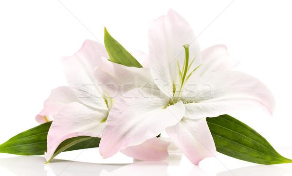 Stock fotó: Liliom · izolált · fehér · virágok · természet · zöld