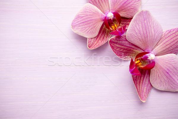 Rosa orchidea fiore saluto sfondo bellezza Foto d'archivio © gitusik