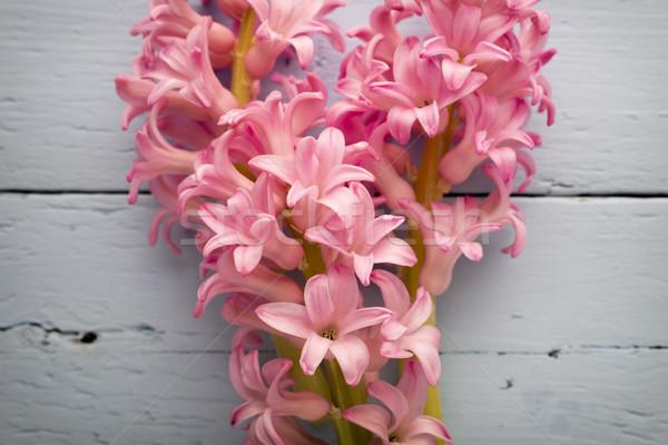 Foto stock: Jacinto · rosa · mesa · de · madeira · verde · cabeça · planta