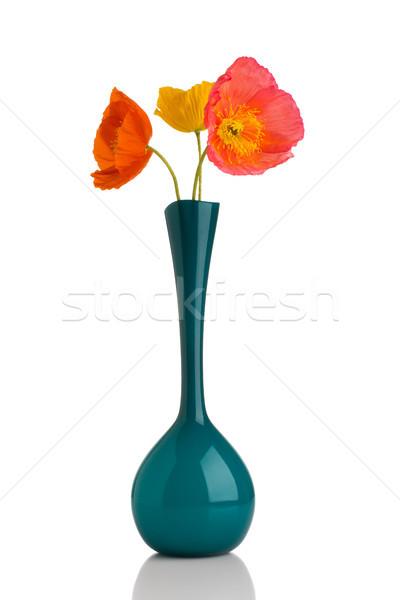 Papoula vaso branco flores folha Foto stock © gitusik