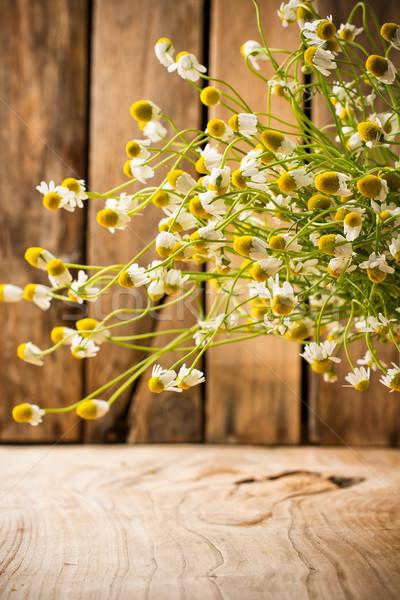 Сток-фото: ромашка · цветы · поверхность · цветок