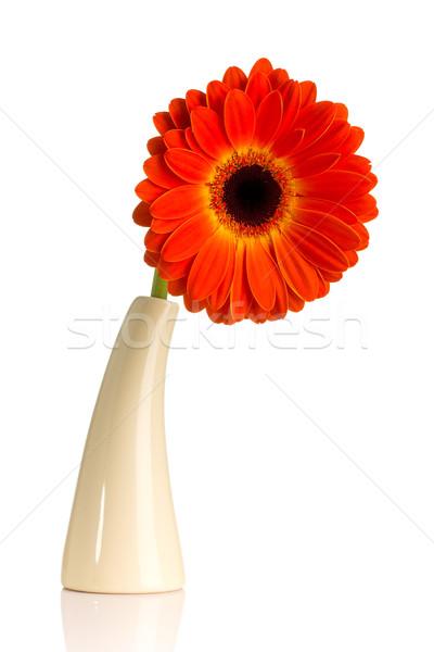 Foto d'archivio: Vaso · isolato · bianco · fiore · fiori · primavera