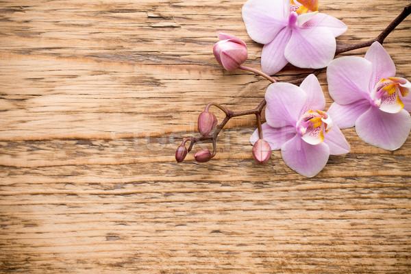 Orchidee roze houten hout abstract gezondheid Stockfoto © gitusik