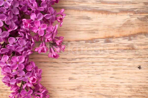 Orgona lila fából készült stúdió fotózás fa Stock fotó © gitusik