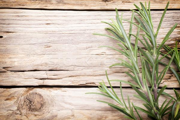 Rozmaring gally fából készült levél zöld növény Stock fotó © gitusik