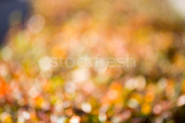 Autumn bokeh. Stock photo © gitusik