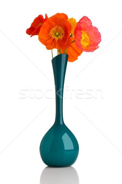 Poppy. Stock photo © gitusik