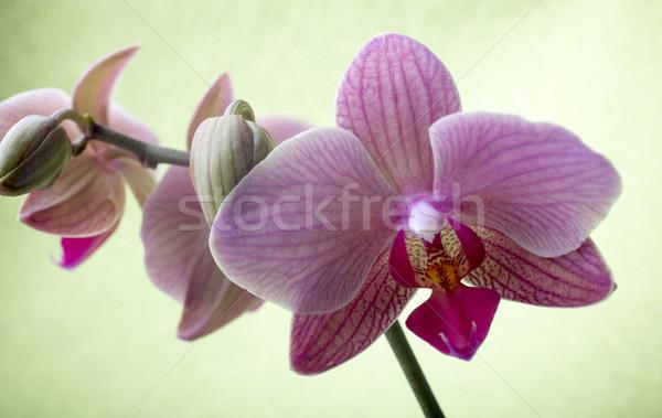Rosa orchidea colorato biglietto d'auguri sfondo bellezza Foto d'archivio © gitusik