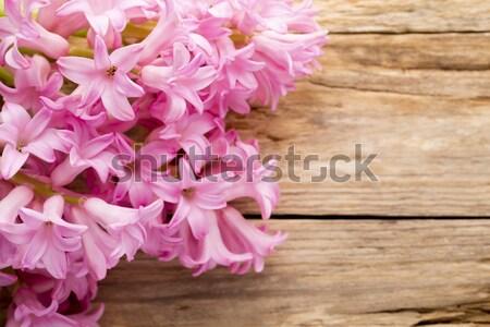 ヒヤシンス ピンク 木製のテーブル 緑 頭 工場 ストックフォト © gitusik
