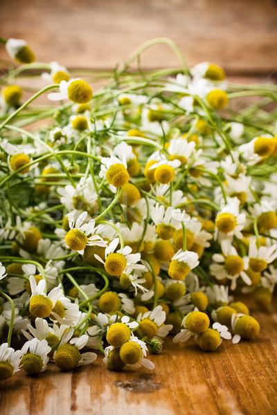 Manzanilla flores superficie flor familia Foto stock © gitusik