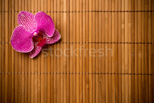Orchid. Stock photo © gitusik