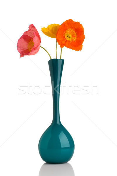Poppy. Stock photo © gitusik
